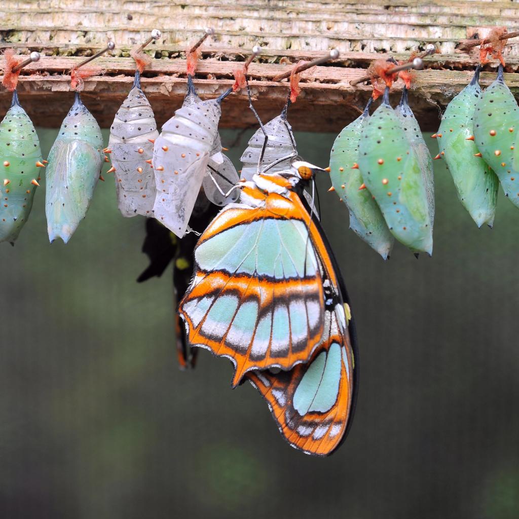 nebojte sa zmeny, prináša do života krásne farby